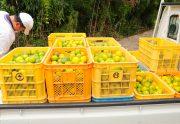 徳島の焼肉屋。柚子狩り
